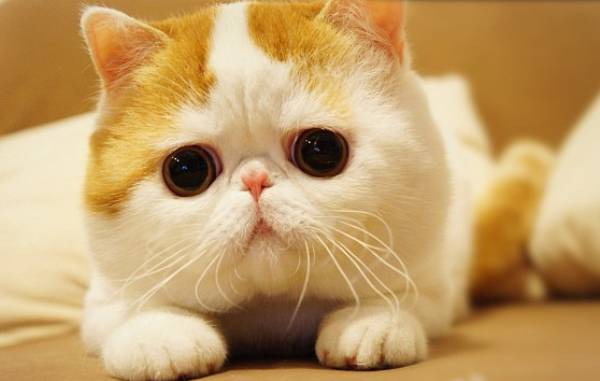 Snoopy: More Of The Cutest Cat Ever, Snoopybabe