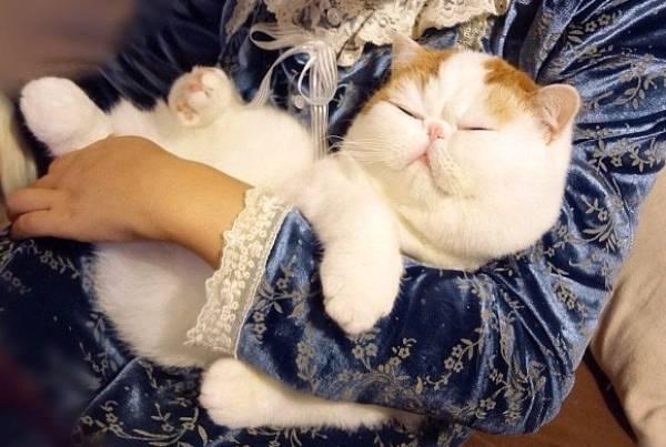 http://cdn.pbh2.com/wordpress/wp-content/uploads/2012/07/cutest-cat-ever-snoopy-sleeping-arms.jpg