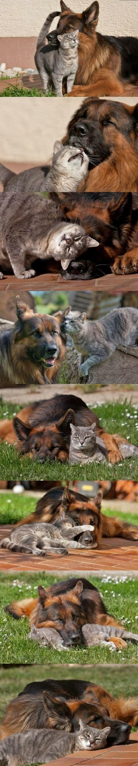 dog cat friendship The 10 Most Adorable Animal Friendships