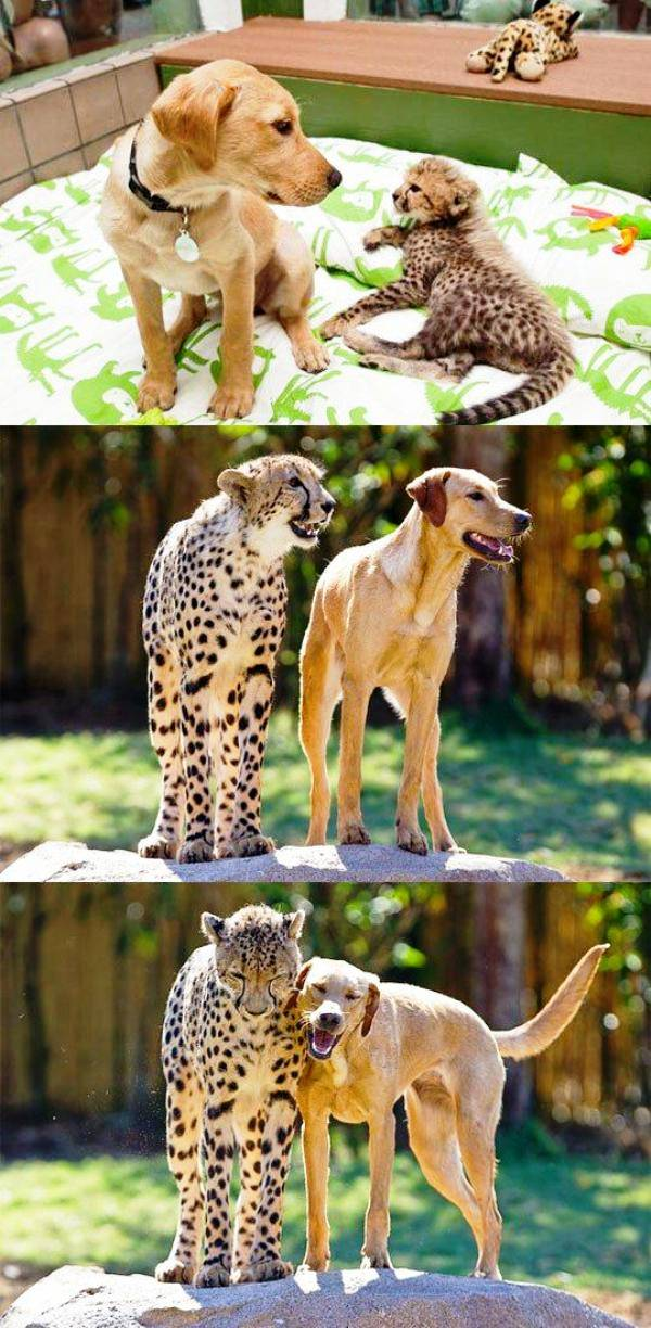 leopard dog friendship The 10 Most Adorable Animal Friendships