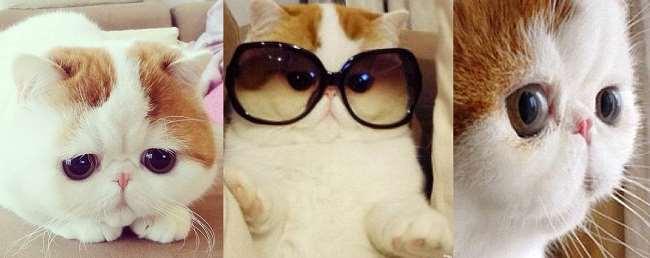 Cute Cat Sunglasses Meme