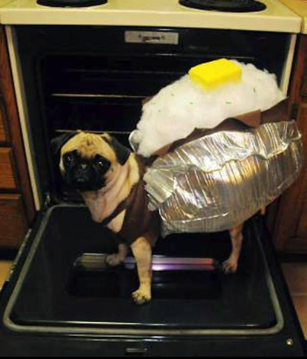 30 Ridiculously Hilarious Pug Costumes